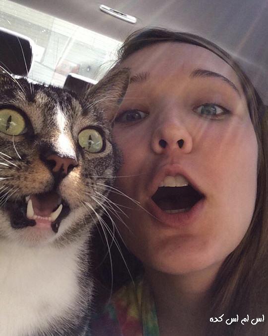 http://www.smskade.ir/wp-content/uploads/2015/04/funny-selfie-1.jpg