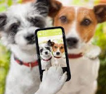 http://www.smskade.ir/wp-content/uploads/2015/04/funny-selfie-3.jpg