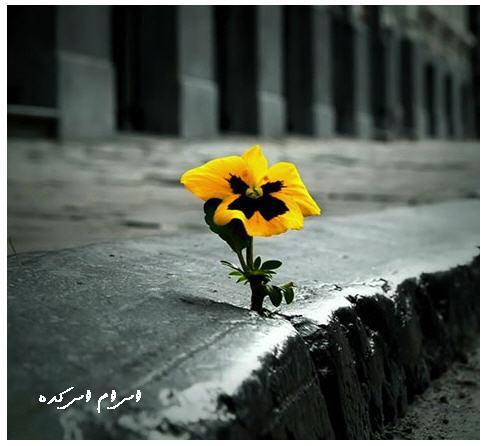 http://www.smskade.ir/wp-content/uploads/2015/04/matn-asheghaneh-f94.jpg