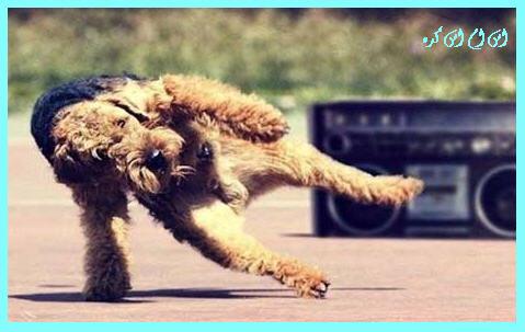 http://www.smskade.ir/wp-content/uploads/2015/05/pic-dance-animals-1.jpg