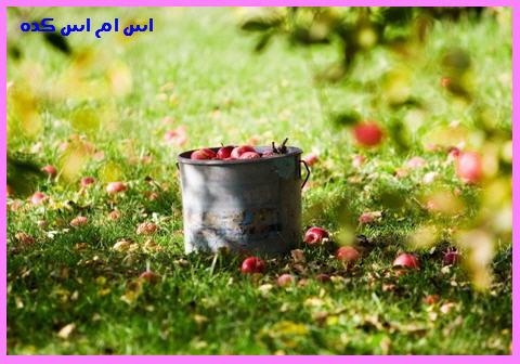 http://www.smskade.ir/wp-content/uploads/2015/08/moamay-nafarat-dekhel-bagh-m94.jpg
