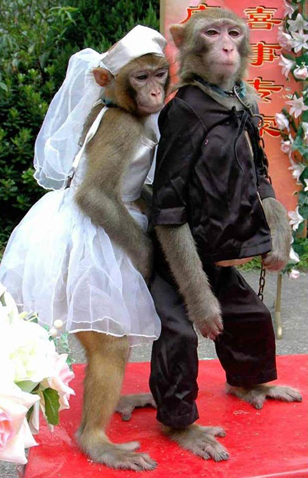 http://www.smskade.ir/wp-content/uploads/2015/09/animals-fun-sh94-10.jpg