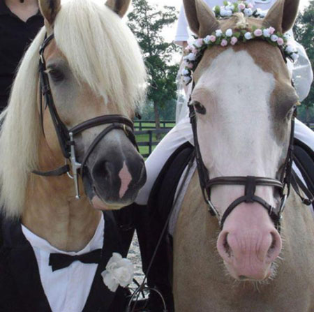 http://www.smskade.ir/wp-content/uploads/2015/09/animals-fun-sh94-4.jpg