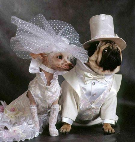 http://www.smskade.ir/wp-content/uploads/2015/09/animals-fun-sh94-5.jpg