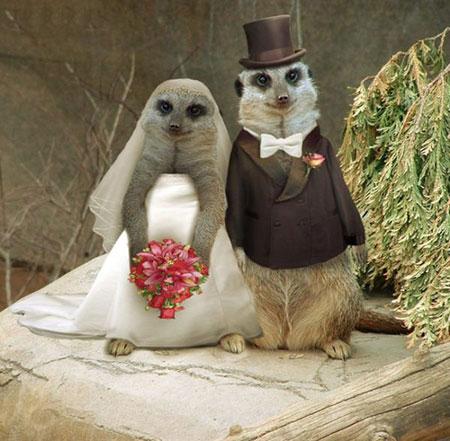 http://www.smskade.ir/wp-content/uploads/2015/09/animals-fun-sh94-6.jpg
