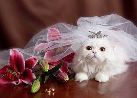http://www.smskade.ir/wp-content/uploads/2015/09/animals-fun-sh94-7.jpg