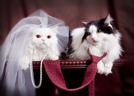 http://www.smskade.ir/wp-content/uploads/2015/09/animals-fun-sh94-8.jpg