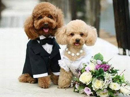 http://www.smskade.ir/wp-content/uploads/2015/09/animals-fun-sh94.jpg